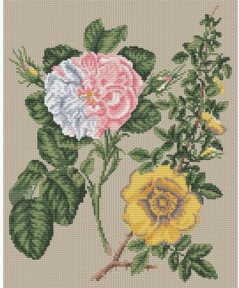 Damask Rose and Yellow Rose - Cross Stitch Kit