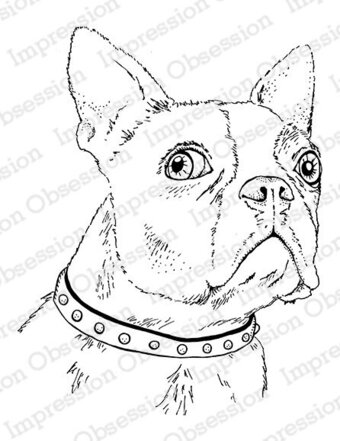 Boston Terrier - Cling Stamp