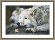 Lounging Wolf - Cross Stitch Pattern