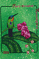 Fiery Throated Hummingbird (2009)